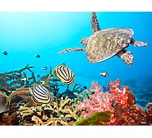 Butterflyfishes and turtle Photographic Print