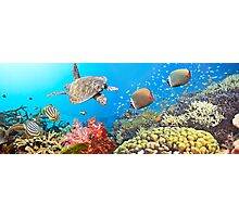 Underwater panorama Photographic Print