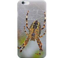 Garden Spider iPhone Case/Skin