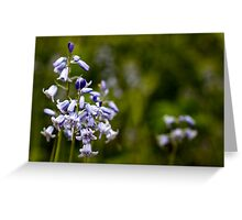 Bluebells, Oxborough Hall Greeting Card