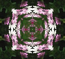 Purple and White Daisies Kaleidoscope 5 by Christopher Johnson