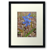 Beautiful and Blue Framed Print