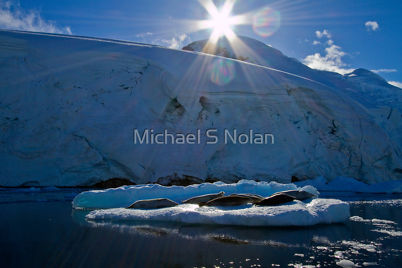 Just Chillin' and Catching Some Rays! by Michael S Nolan