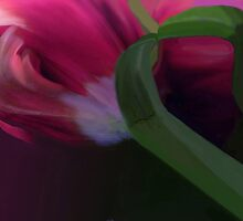 Tulip abstract by Marlies Odehnal