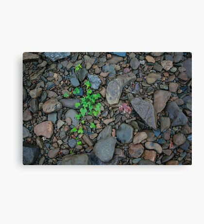 River Ivy Canvas Print