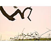 M.. Photographic Print