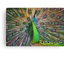 Peacock, Chiang Mai, Thailand Canvas Print