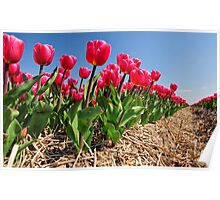 Red Tulip Avenue Poster