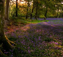 Bluebells 4 @  Blackbury Camp, Devon by David-J