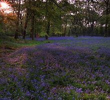 Bluebells 5 @ Blackbury Camp, Devon by David-J