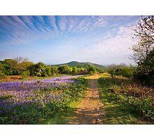Malvern Hills : Midsummer Bluebells 2 Photographic Print