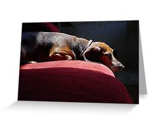 Adult Dachsund Resting on Red Sofa in Sunbeams detailed Greeting Card