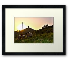 Sheep near Glastonbury Tor Framed Print