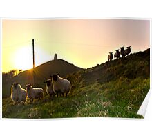Sheep near Glastonbury Tor Poster