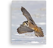 Swoop, there it is!  Canvas Print