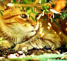 wildcat by Iakona Rafael