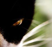 feline by Ingz