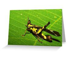 Rainforest katydid, Thailand Greeting Card