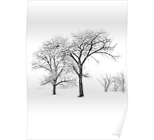 Snow Trees II Poster