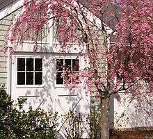 Blissful Spring by daphsam