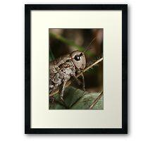Grasshopper from Tien-Shan meadow, Kyrgyzstan Framed Print