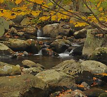 Smokey Mountains Waterfall by Stephen Vecchiotti