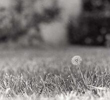 Make a Wish - Dandelion Print by ErilynSalum
