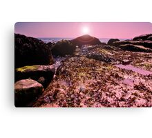 seaweed on the Rocks! Canvas Print