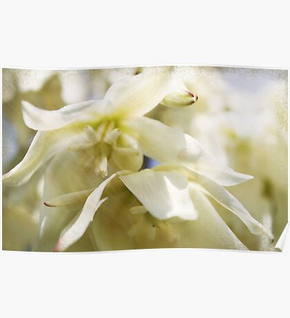 Yucca Flowers Poster