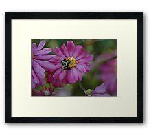 A Bee's Work Framed Print