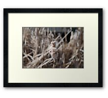 Still moments Framed Print
