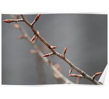 Spring buds Poster