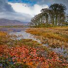 Autumn leaves, Loch Awe by Gary Eason + Flight Artworks