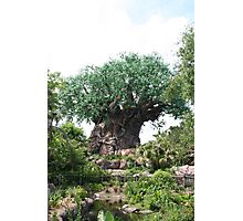 Tree of Life - Walt Disney World Photographic Print