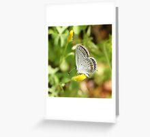 Eastern Tailed-Blue Hairstreak... Greeting Card
