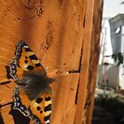 Butterflies, Fences and Angles by Pippa Carvell