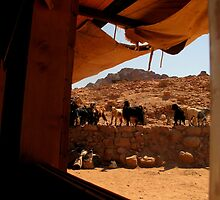 Petra Goats by Pippa Carvell