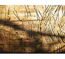 Woodworm Journerys Photographic Print