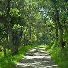Pathway under the oaks- Monterey, California by David Chesluk