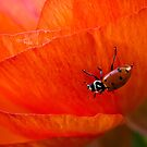 it's a ladybug world by Celeste Mookherjee