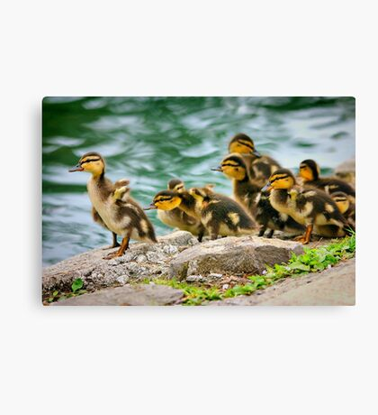 Last One in's a Rotten Egg Canvas Print