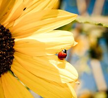 In the sun by pacoespinoza