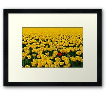 One Among Many - Skagit Valley Tulip Festival Framed Print