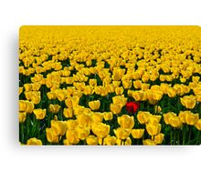One Among Many - Skagit Valley Tulip Festival Canvas Print