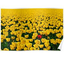 One Among Many - Skagit Valley Tulip Festival Poster
