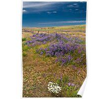 Palouse Spring - Washington Poster