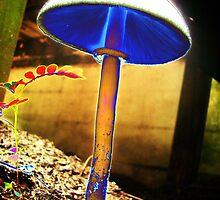 Tall Shroom in my garden in Saint Augustine, Florida by keenu