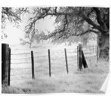 Fence and Oaks Poster