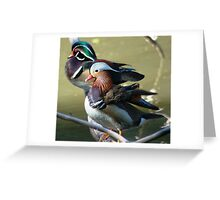 Wooden and mandarin ducks (males)  Greeting Card