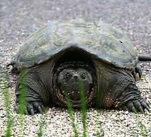 Mr. Turtle playing Hide and Seek behind a blade of grass. by kneff